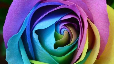 Download Free Hd Beautiful Rose Flower Wallpape