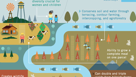 How to feed the world without destroying it [Infographic] | Sustainable Futures | Scoop.it