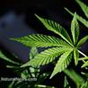 Let's Legalize, Regulate, and Tax Marijuana like Alcohol