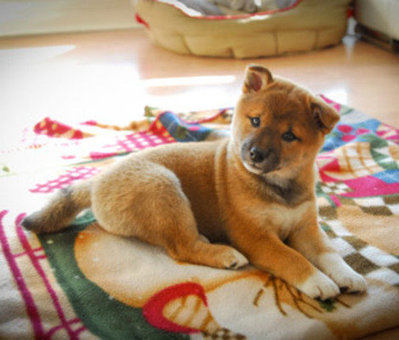 Most Popular Puppy Names of 2013 | Troy West's Radio Show Prep | Scoop.it