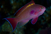 Guess Which Fish Is Female | Cool Biology Sites! | Scoop.it
