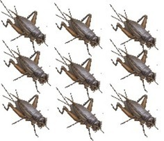 Why Eat Bugs #1: Feed-Conversion Rates | Entomophagy: Edible Insects and the Future of Food | Scoop.it