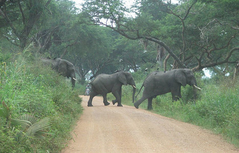 Madhvani loses monopoly over Murchison Falls national park | UgandaNuz | Scoop.it