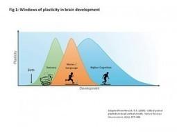 Harnessing neuroplasticity to drive and repair brain development | SharpBrains | Brain Circus | Scoop.it