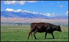 Toutes nos vaches descendraient de 80 aurochs ! | santé et protection sociale | Scoop.it