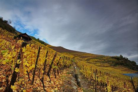 DOMAINE PAUL BLANCK, Kientzheim (Vin d'Alsace). | Gastronomie et alimentation pour la santé | Scoop.it