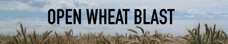Open Wheat Blast – Making Data Instantly Accessible (2016)   Publications   Scoop.it