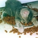Transitioning Dry Food Addicts to Canned Food - Pt 1   Pedegru   Animals Make Life Better   Scoop.it
