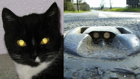 Creepy Cat Eyes Inspire Road Markers | Biomimicry | Scoop.it
