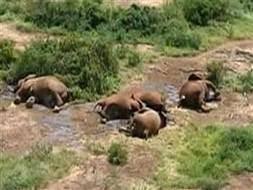 NBC News VIDEO: Elephant family lost to poachers in Kenya | Rhino poaching | Scoop.it