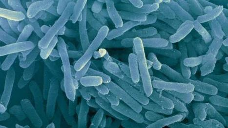 A microbe no one has even seen could explain our origins | Media Cultures: Microbiology in the news | Scoop.it