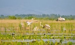 Montenegro's pristine Lake Skadar threatened by new resort | Farming, Forests, Water, Fishing and Environment | Scoop.it