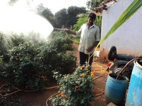 Organic farming essay