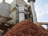 Andalucía lidera el sector de la biomasa eléctrica con energía para ... | energía tibt | Scoop.it