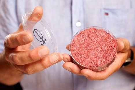 Scientists serve lab-made burger from cow cells | Amazing Science | Scoop.it
