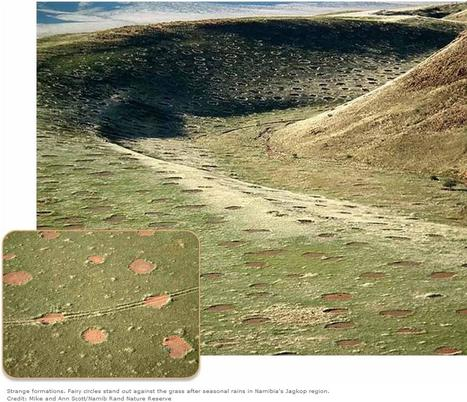 Mysterious Fairy Circles Are 'Alive' | Science and life | Scoop.it