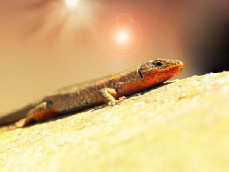 reptiles\' in Pangea | Scoop.it