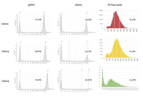 bioRxiv: The megabase-sized fungal genome of Rhizoctonia solani assembled from nanopore reads only (2016)   Plant Pathogenomics   Scoop.it