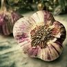 Gourmet Garlic