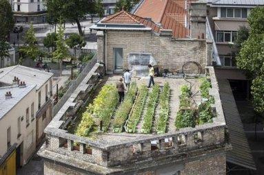 À Paris, l'agriculture S'APPREND sur le toit des écoles | partage&collaboratif | Scoop.it