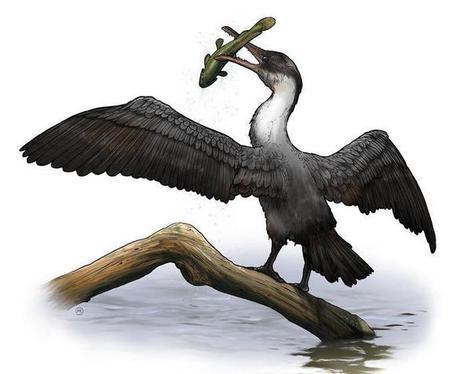 New prehistoric bird species discovered   Gaia Diary   Scoop.it