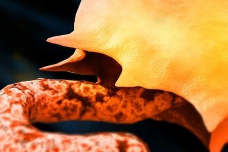 The biggest killer diseases in history | Virology News | Scoop.it