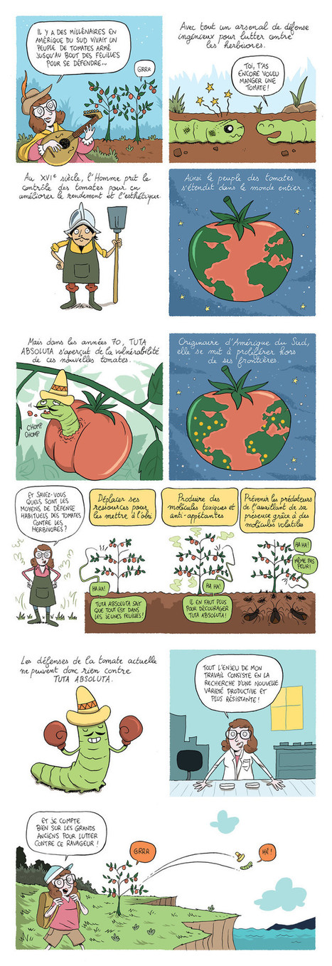Ma thèse en BD : « _Tuta absoluta_, la chenille tueuse de tomates » | De Natura Rerum | Scoop.it