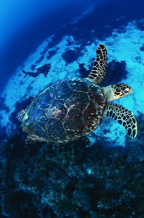 Dive the Elements in Belize's Wild Atolls | Belize in Social Media | Scoop.it