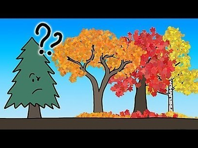 The Real Reason Leaves Change Color In the Fall | The 21st Century | Scoop.it