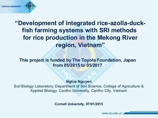 Vietnam azolla rice duck fish farming systems vietnam azolla rice duck fish farming systems ccuart Choice Image