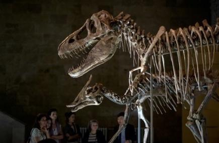 La Mongolie veut récupérer ses dinosaures pillés | Les déserts dans le monde | Scoop.it