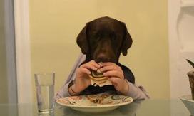 The EFL SMARTblog: It's a dog's life! | TeachingEnglish | Articles re. education | Scoop.it