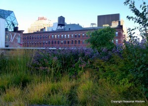 The High Line Takes Root in New York City | Annie Haven | Haven Brand | Scoop.it