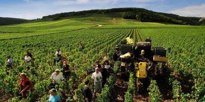 Pourquoi le vin français est le meilleur | champagne & marketing | Scoop.it