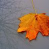Fall Images for Inspiration