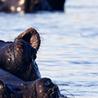 Don´t follow the Hippo