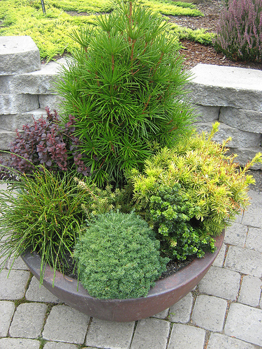 Tips For Planting Trees And Shrubs In Container
