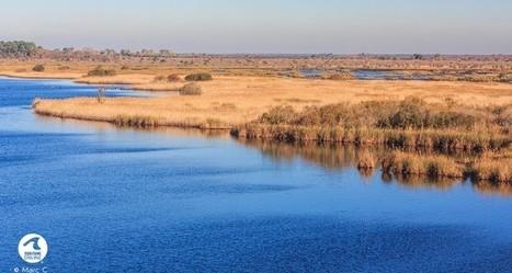 La Réserve Naturelle Nationale de L'Etang de Cousseau | Revue de presse Pays Médoc | Scoop.it