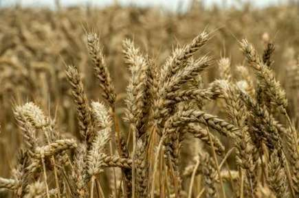 Agriculture victim of and solution to climate change | CIHEAM Press Review | Scoop.it