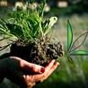 La sostenibilità di Lucanapa