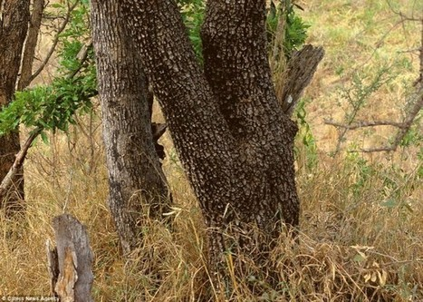 Higher Perspective: Can You Find the Hidden Animals In These 20 Wildlife Photos?   My Funny Africa.. Bushwhacker anecdotes   Scoop.it