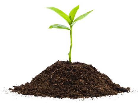 Which? sparks controversy by telling gardeners not to bother growing plants in peat-free compost | The Barley Mow | Scoop.it