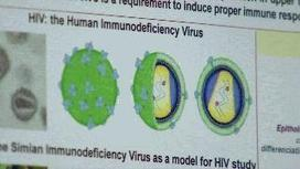 HIV Vaccine Expected to Save Lives   Virology News   Scoop.it