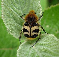 Les insectes au service de la forêt | Veille Scientifique Agroalimentaire - Agronomie | Scoop.it