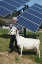 Goats go mainstream: Cheese, kefir and yogurt all offer benefits — and flavor | Simple, sustainable living. | Scoop.it