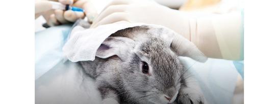 Cosmétiques: vers la fin des tests sur les animaux?