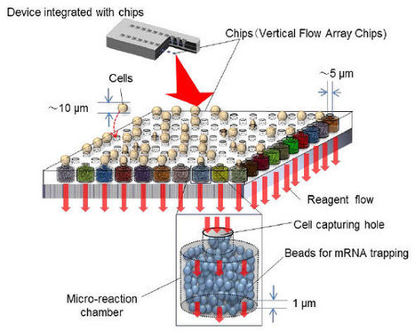 Vertical flow array chips reliably identify cell types from single-cell mRNA sequencing experiments | RNA-Seq Blog | Tools and tips for scientific tinkers and tailors | Scoop.it