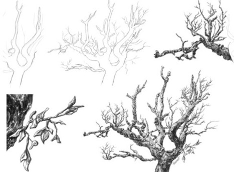 Line Art Photo Tutorial : Tree tutorial' in drawing and painting tutorials