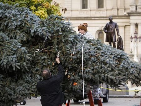 Michigan seeks Christmas tree (yes, it's still only May) | Christmas Trees and More | Scoop.it