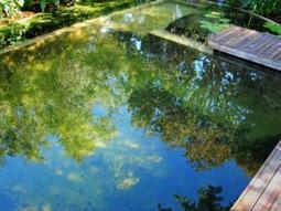 Wild, unkempt nature - in a garden - IOL Lifestyle | 100 Acre Wood | Scoop.it